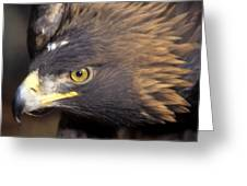 Fierce Golden Eagle Greeting Card