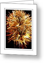 Fiery Floral Greeting Card