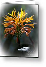 Fiery Flower Greeting Card