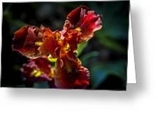 Fiery Iris Greeting Card
