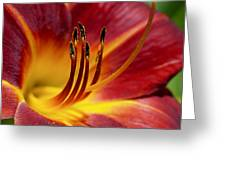 Fiery Lily Greeting Card by Rona Black