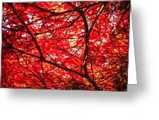 Fiery Maple Veins Greeting Card