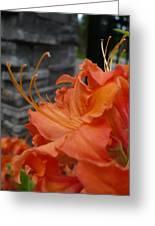 Fiery Orange Azalea  Greeting Card