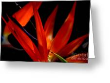 Fiery Red Bird Of Paradise Greeting Card