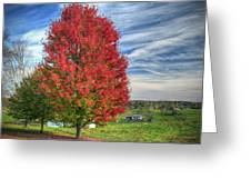 Fiery Red Maple Greeting Card