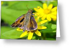 Fiery Skipper Butterfly Greeting Card