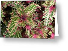 Fiery Spiky Leaves Greeting Card