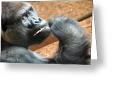 Fiesta Gorilla Greeting Card