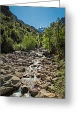 Figarella River In The Foret De Bonifatu In Corsica Greeting Card
