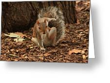 Fighter Squirrel Greeting Card