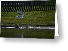 Fighting Birds Greeting Card
