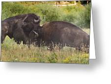 Fighting Bison Greeting Card by Mike Cavaroc
