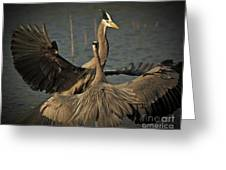 Fighting Great Blue Herons Greeting Card