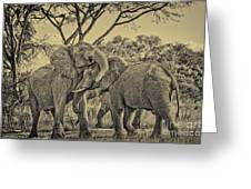 fighting male African elephants Greeting Card