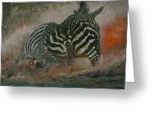 Fighting Zebras Greeting Card