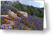 Figueroa Mountain Splendor Greeting Card
