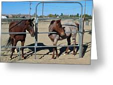 Fillies At The Gate Greeting Card