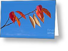 Final Fling Greeting Card