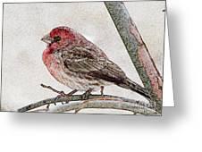 Finch Art Greeting Card