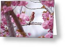 Finch Frame Greeting Card