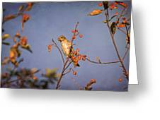 Finch In A Cherry Tree Greeting Card