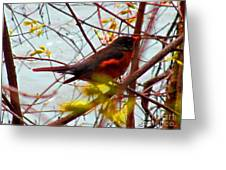 Finch In Springtime On A Very Windy Day Greeting Card