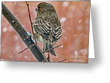 Finch On A Snowy Day Greeting Card