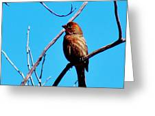 Finch On Branch 031015a Greeting Card