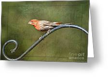 Finch On Guard I Greeting Card