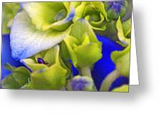 Find Ant Hydrangea Greeting Card
