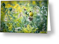 Find The Finch Greeting Card