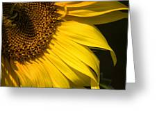 Find The Spider In The Sunflower Greeting Card by Belinda Greb