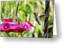 Fine Feathered Hummingbird Greeting Card