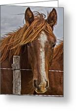 Fine Filly Greeting Card by Mamie Thornbrue