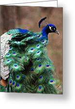 Finely Feathered Greeting Card