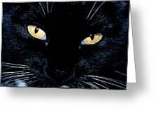 Fiona The Tuxedo Cat Greeting Card