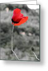 Fiore Rosso Greeting Card