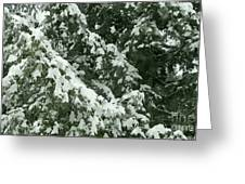 Fir Tree Branch Covered With Snow  Greeting Card