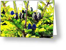 Fir Tree Buds Abstract Greeting Card