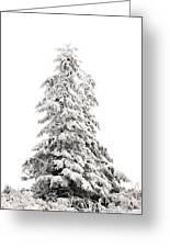 Fir Tree In Winter Greeting Card