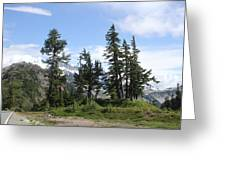Fir Trees At Mount Baker Greeting Card