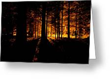 Fir Trees Back Lit  Greeting Card