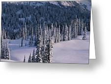 Fir Trees, Mount Rainier National Park Greeting Card