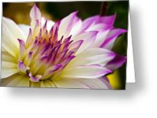 Fire And Ice - Dahlia Greeting Card