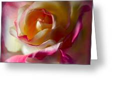 Fire And Ice Rose In Square Format Greeting Card
