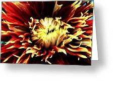 Fire Bloom Greeting Card by Natalya Karavay