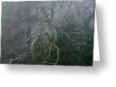 Fire Cherry In Mist Greeting Card
