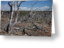 Fire Damage Greeting Card