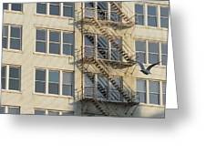 Fire Escape And Bird Greeting Card