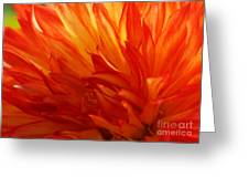 Fire Of A Dahlia Greeting Card
